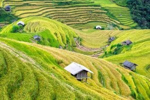 country-crop-cropland-572741